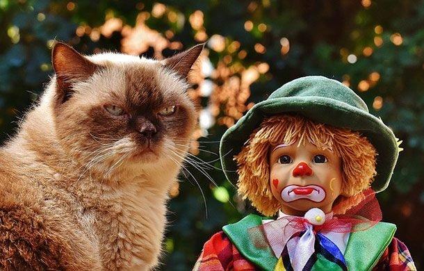 Top-25: Lucruri uimitoare despre pisici