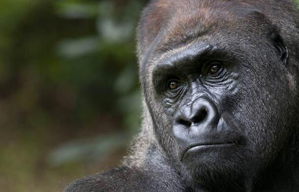 Top-25: Cele mai inteligente animale de pe planetă, abilitățile cărora sunt pur și simplu uimitoare