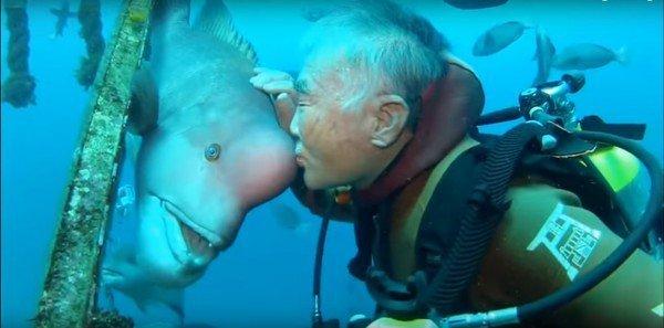 O istorie de prietenie incredibilă dintre un scafandru și un pește buzat