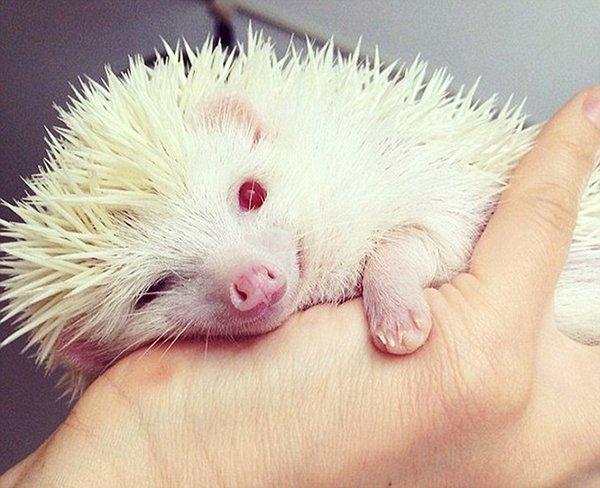 TOP-10: Cele mai uimitoare animale care suferă de albinism