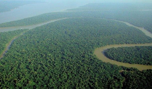 TOP-25: Curiozități despre râul Amazon și pădurea amazoniană