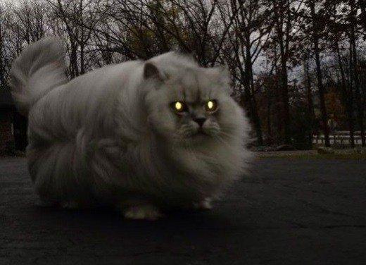 Cele mai bizare și înspăimântătoare pisici pe care le-ai văzut vreo dată