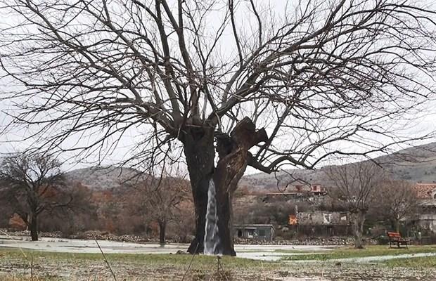 """Miracolul naturii balcanice: """"Arborele de apă"""" din Muntenegru (6  foto + video)"""